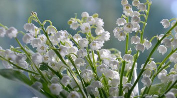 flowers-4240129_1280